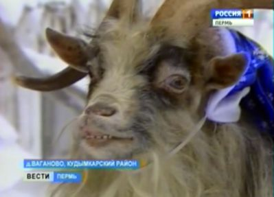 Козёл Иван поздравит коми-пермяков с Новым годом