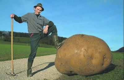 фото копают картошку