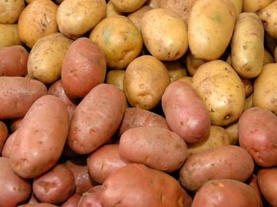 Белорусские ученые вывели два новых сорта картофеля