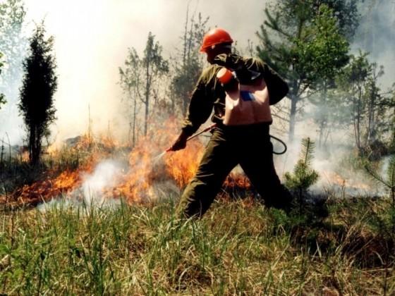 Выбран лучший лесной пожарный региона