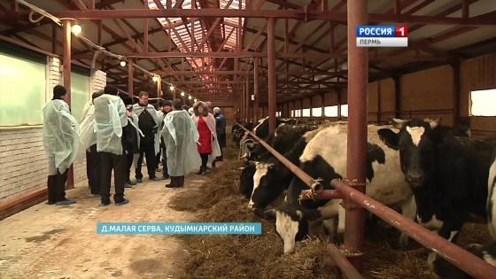 Минсельхоз России пообещал аграриям льготы по кредиту