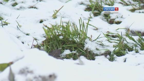 В начале ноября в Пермском крае установится снежный покров