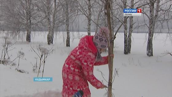 Кудымкарская школьница превратила ядовитый борщевик в «шум дождя»