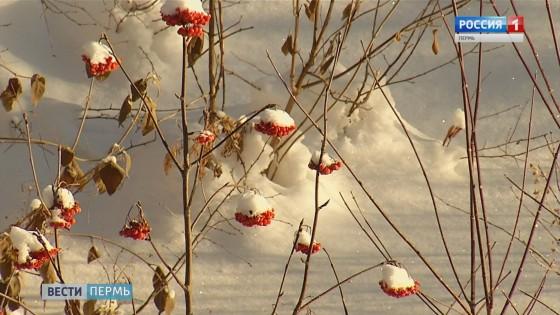 Сад соловьев