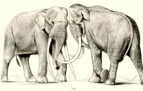 Ученые обнаружили вПрикамье фрагмент зуба трогонтериевого слона