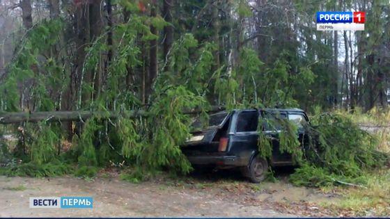 В Перми сильный ветер повалил деревья