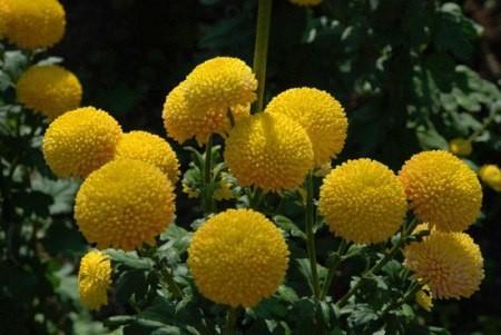 цвeты