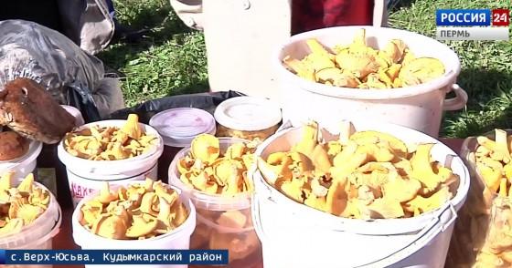 Фестиваль «Ай да рыжик!» прошел при дефиците грибов