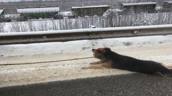 собаку привязали к машине