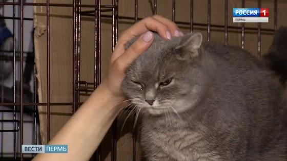 В Перми откроют кошачье кафе