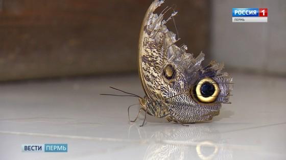 Уникальная коллекция живых бабочек под угрозой исчезновения