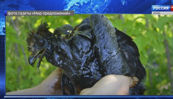 В Осе в нефтяную «ловушку» угодили новые жертвы
