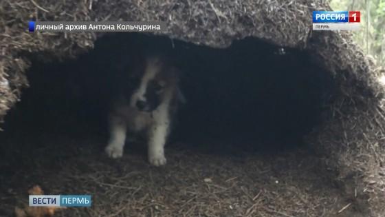 Зоозащитники нашли щенков в муравейнике