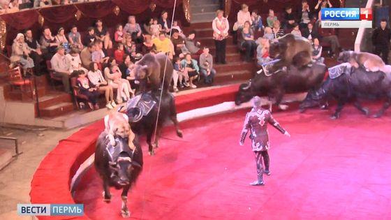 В Пермском цирке представили новое шоу «Карусель животных»