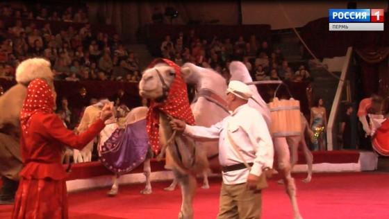 В Пермском цирке настоящая «Карусель животных»