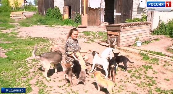 В Кудымкаре строится приют для бездомных собак