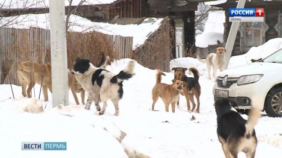 Встреча ребенка со стаей бродячих собак закончилась реанимацией