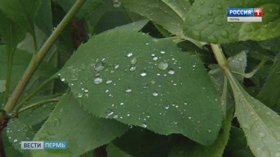 В Прикамье испортилась погода