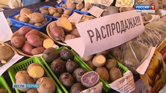 У ДК Гагарина открылась сельскохозяйственная ярмарка