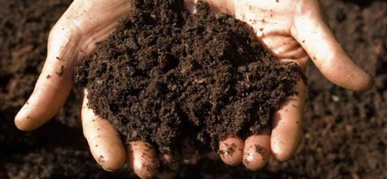 2/3 полей в Пермском крае нуждается в раскислении почв