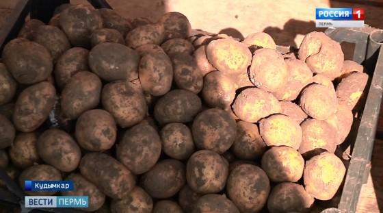 В Кудымкаре оценивают урожай 2019