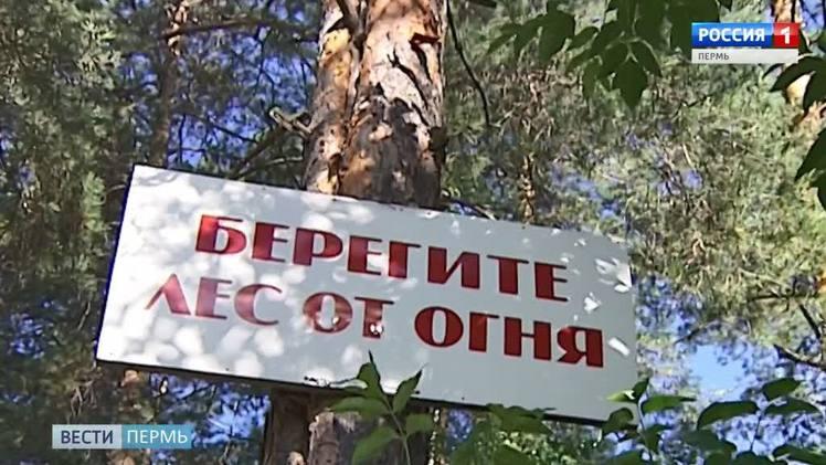 В 27 территориях Прикамья введен режим ограничения пребывания граждан в лесах