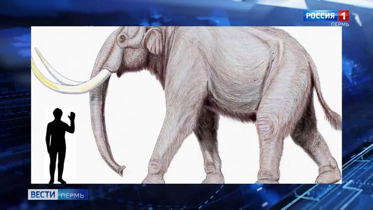 Трогонтериевое слонотворение: пермские палеонтологи вернулись с раскопок