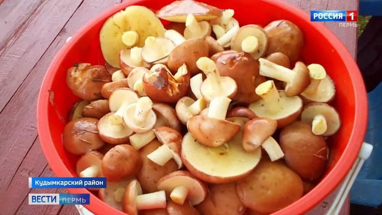 В Коми-Пермяцком округе стартовал грибной сезон