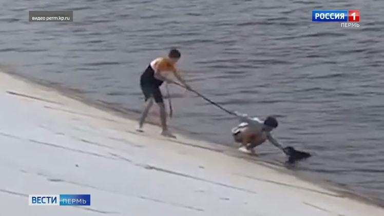 На набережной подростки помогли собаке выбраться из воды