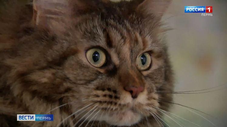 В электричках стартует акция для владельцев домашних животных