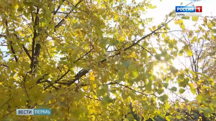 Синоптики рассказали, когда в Прикамье придет бабье лето