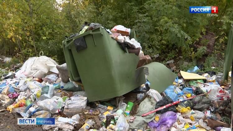 Контейнеры раздора: пермяки пожаловались на грязные мусорные площадки и полчища крыс
