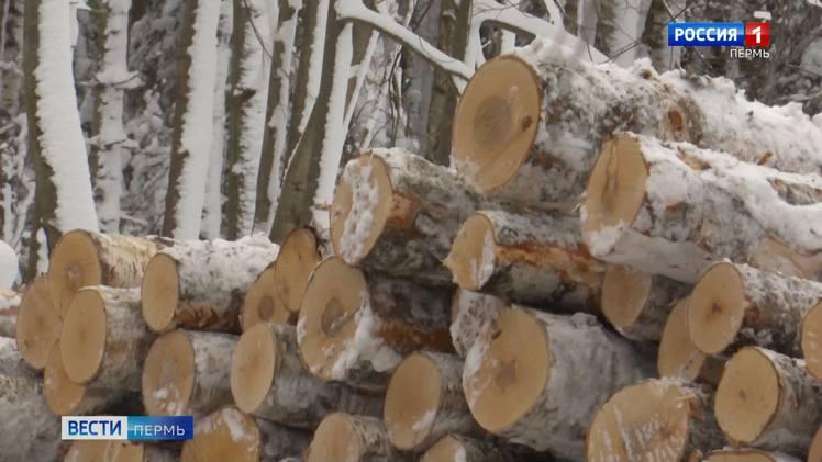 Срубили более 6 тысяч деревьев. Два пермяка осуждены за незаконную рубку леса