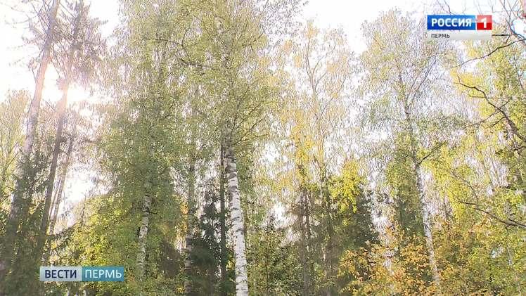 К сентябрю 2021 года в Перми отремонтируют сквер на улице Куфонина