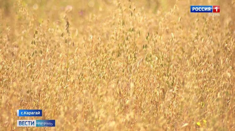 В Карагае обсудили положение дел в сельском хозяйстве