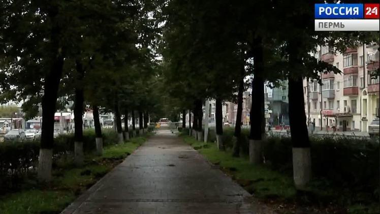 На Комсомольском проспекте заменят аварийные деревья