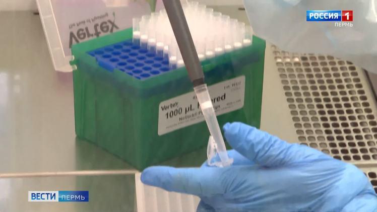 Впервые с начала пандемии в Прикамье за сутки выявлено 450 случаев коронавируса
