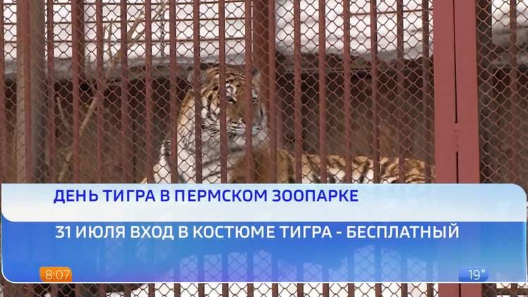 В Пермском зоопарке отметят День тигра
