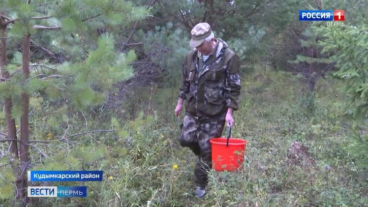 С начала лета в лесах Пермского края потерялись 27 человек